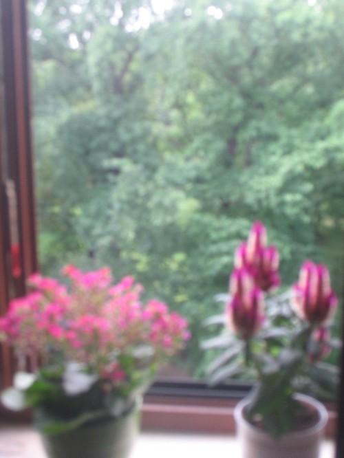 Ein Blick auf Bäume aus einem Fenster mit zwei Topfblumen auf der Fensterbank