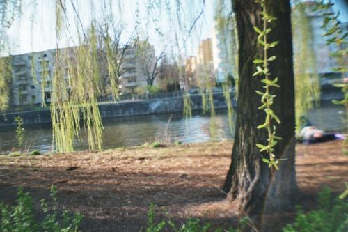 Eine Weide am Flußufer