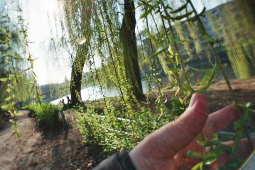 Eine Hand berührt die Blätter einer Weide