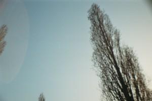 Eine Pappel vor blauem Himmel