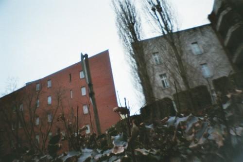 Hochhäuser aus der Bodenperspektive, im Vordergrund Laub