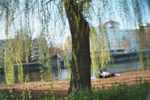 Eine Weide am Ufer eines Flusses
