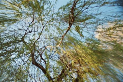 In eine Baumkrone hineinfotografiert