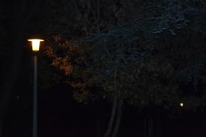 Nachtaufnahme eines Baumes teilweise vom orangenen Licht einer Straßenlaterne beleuchtet.
