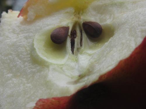 halbierter Apfel