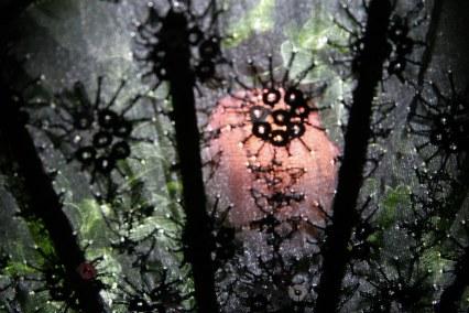 Schwarze Muster mit transparentem Stoff, hinter dem Pflanzen wachsen